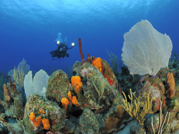 Scuba diver on a coral reef