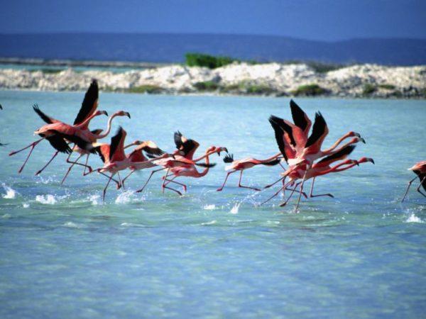 Bonaire Ecotravel