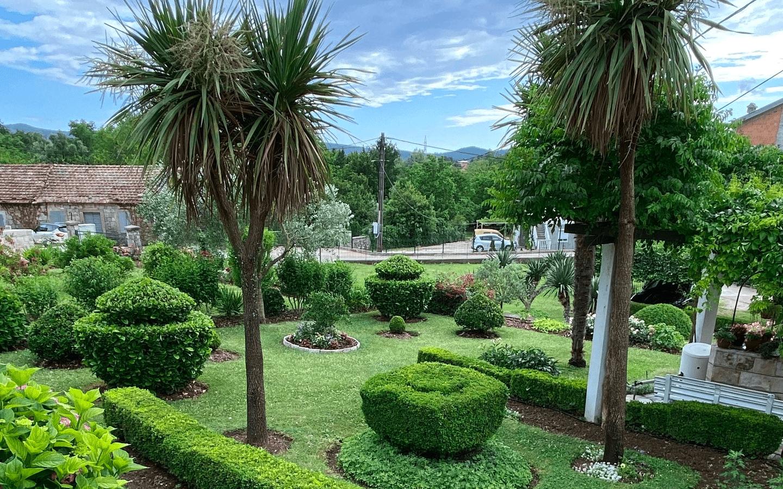 "Magnolia Days and ""Tourist Flower"""